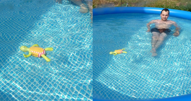 piscine-tortue