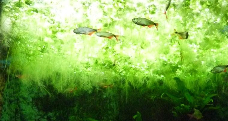 aquarium13