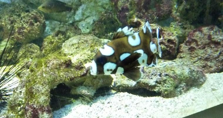 aquarium9