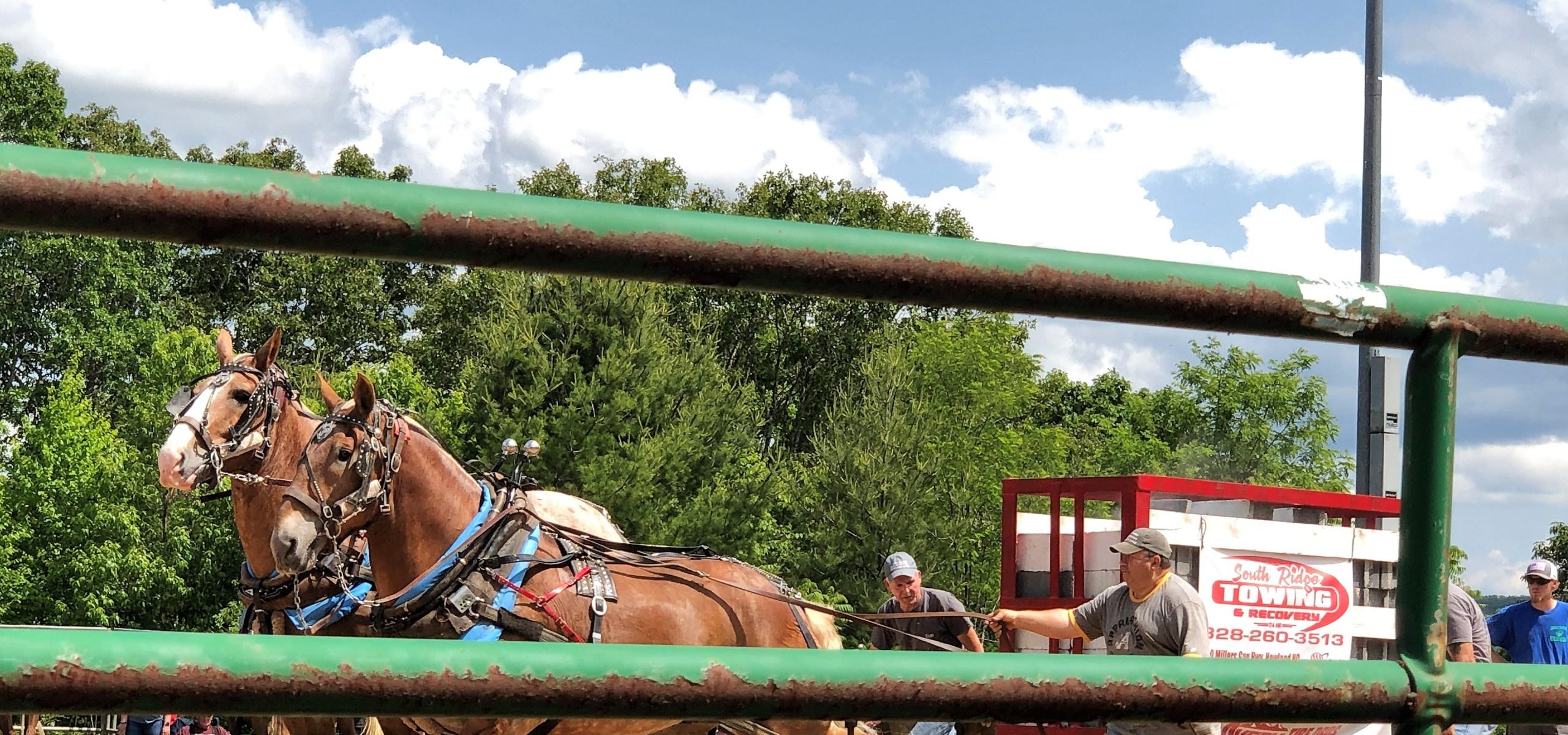 Big Draft horses make the Horse Pull look easy.