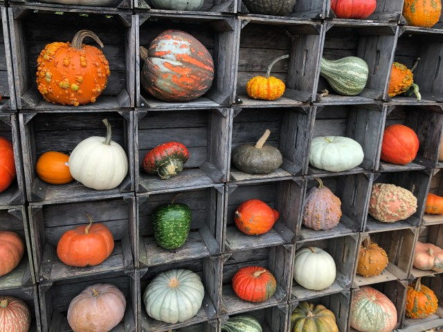 The wall of pumpkins at Nall's Produce features one of every type; this is one section.