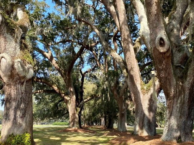 Avenue of Oaks, Sea Island, GA