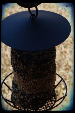 BIRD FEEDER 2 (BORDERS)