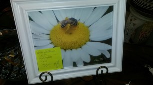 MARY ANN'S BOUTIQUE (JUN 23 '17) FLOWER & BEE PIC
