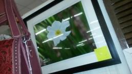 MARY ANN'S BOUTIQUE (JUN 23 '17) PAPER WHITE PIC