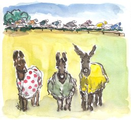 The stars of Stage 18! by Maxine Dodd, SOLD