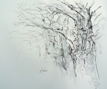 Trees in the mist, January - life drawing, 11.45am