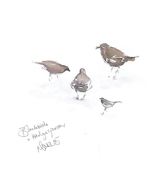 Blackbird sisters and hedgesparrow