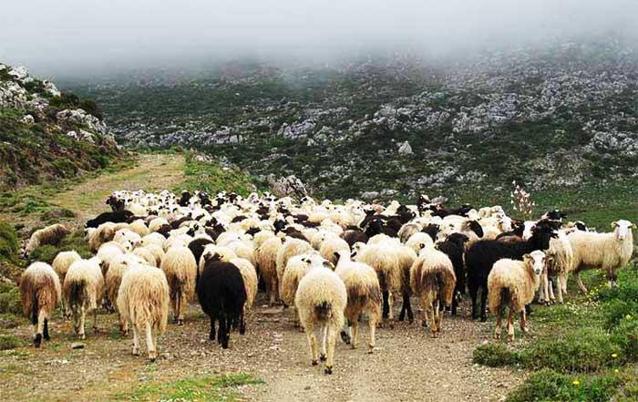 Αποτέλεσμα εικόνας για Ανακοίνωση προς τους Κτηνοτρόφους  για τη ορθή χορήγηση φαρμάκων