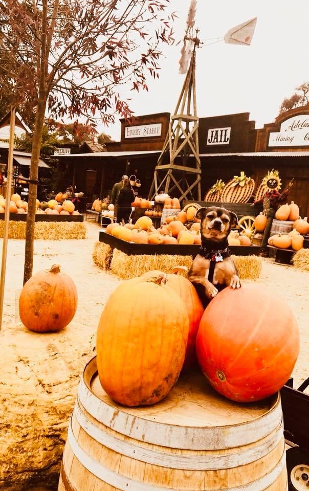 Pumpkin Fife