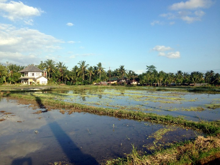 rice-fields-ubud-bali-11