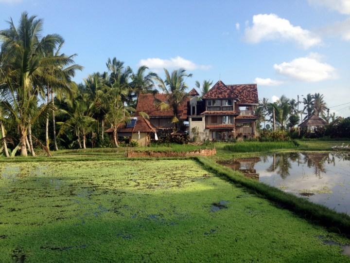 Небольшой деревянный отель Rice Joglo Ubud с историей. Зданиям примерно 150 лет и их перевезли с острова Ява. Новые хозяева нашли домики в 2011 уже на Бали в районе Керобокана и перевезли в Удуб. Комнаты от $70 за ночь.