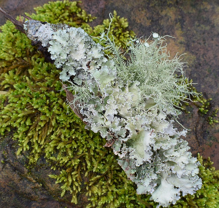 Image result for lichens