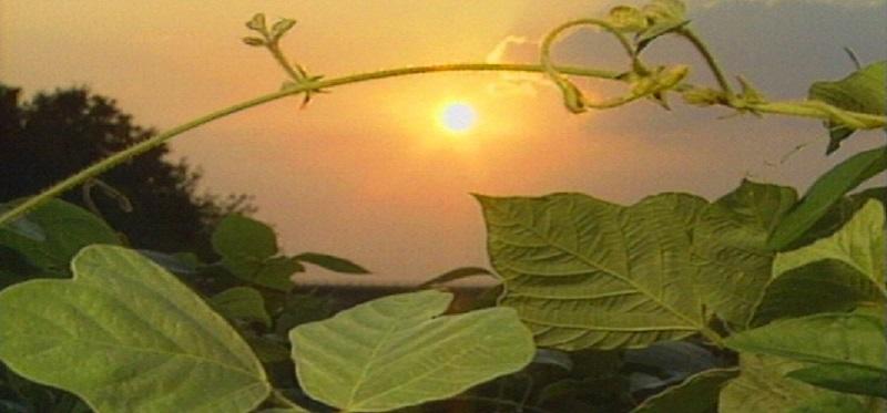 Sunset over Kudzu from The Amazing Story of Kudzu