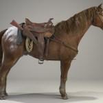 david-de-las-casas-horse-maxwell render 4