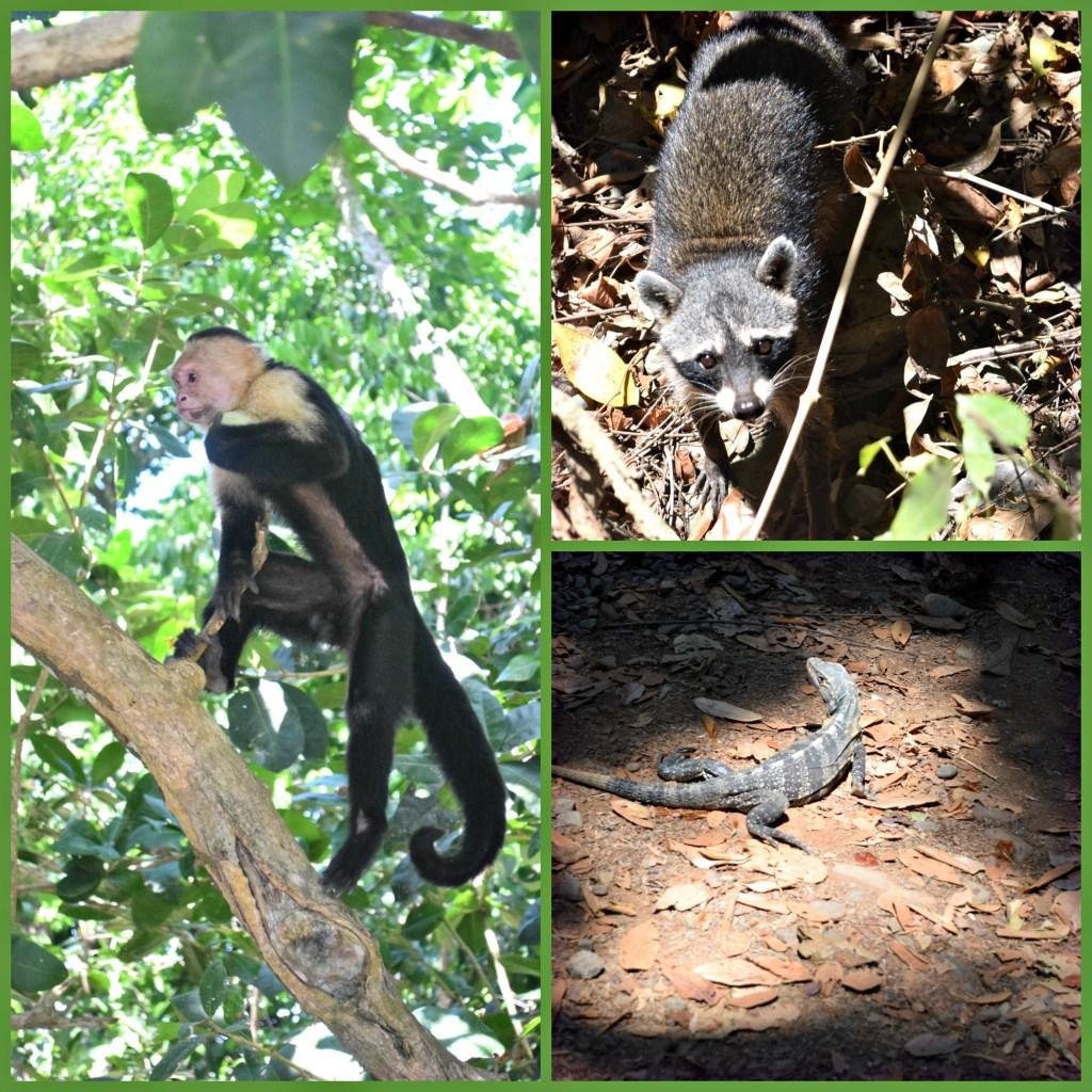 Costa Rica Wildlife animals