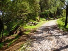 CaboVerde2013-H-36 Route Pico da Cruz