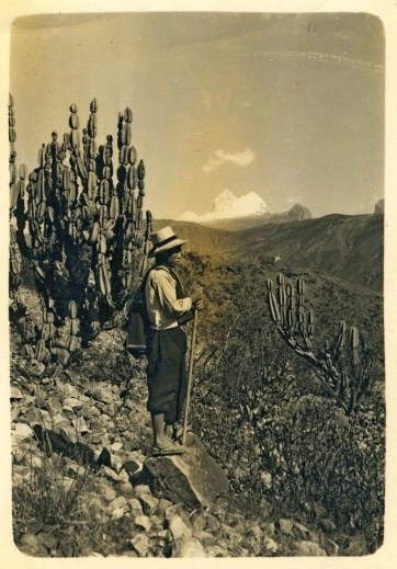 figura 22 Andino y cactus san pedro