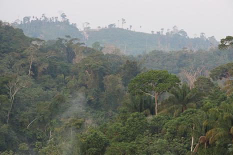 Resultado de imagen para Los bosques de la Selva Alta