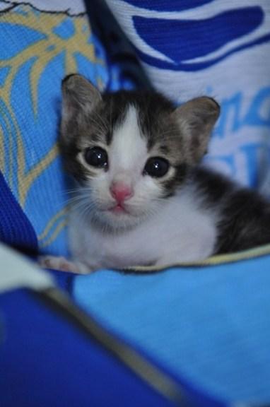 Loveable Kitten