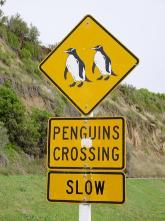 penguins crossing