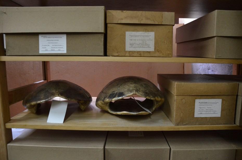 Caparazones de gliptodonte del laboratorio de arqueozoología