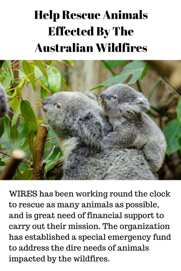 australiananimals.png
