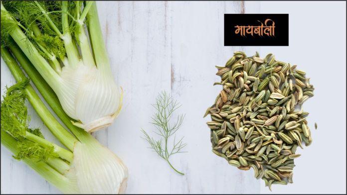 fennel seeds in marathi