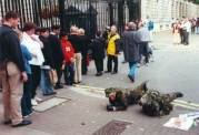 TWO ARTISTS CRAWL THROUGH CENTRAL LONDON (2000) Ignored by some onlookers and creating a palpable sense of unease in others, MAD FOR REAL wore camouflage combat gear and crawled in the mode of combat troops from Trafalgar Square to Waterloo Bridge via Downing Street, Westminster, and the Mall. The progress of the event was transmitted to a radio programme and broadcast.