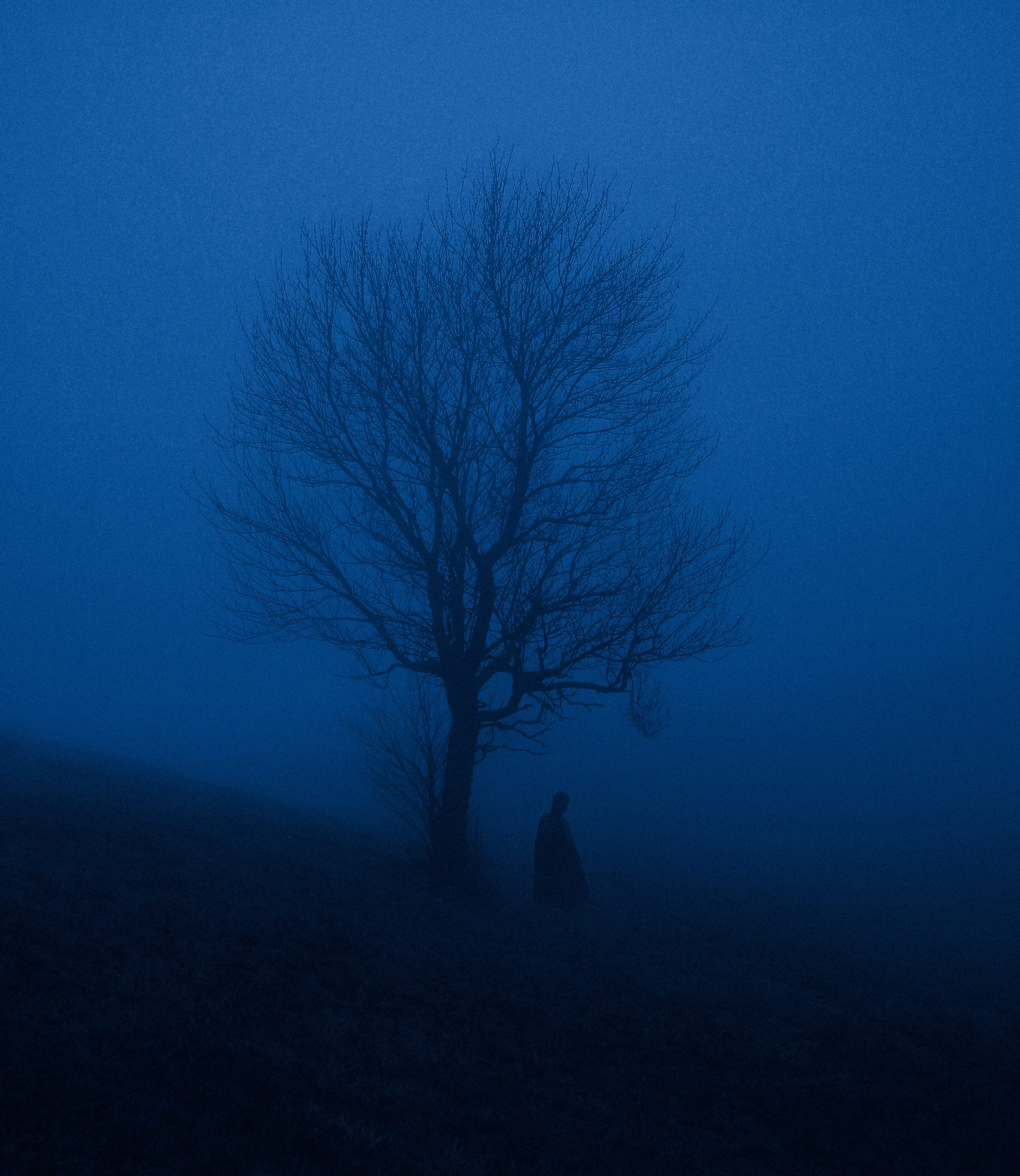 Silhouette of a person under bare tree