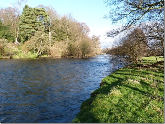 River Dove in Mayfield
