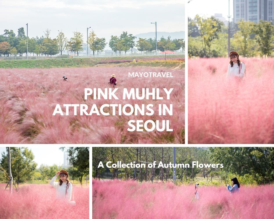A-Collection-of-Autumn-Flowers-Pink-Muhly-attractions-in-Seoul