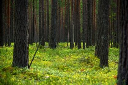 Achtsamkeit im Colditzer Forst