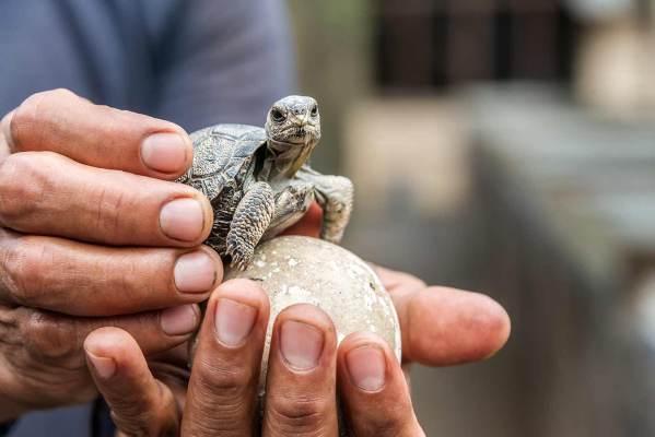 Animales de Galápagos que deberías conocer
