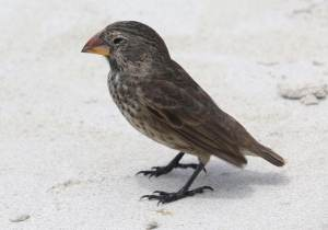 Animales de Galápagos que deberías conocer por cultura general