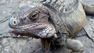 Parque de las iguanas - MayteTours.com