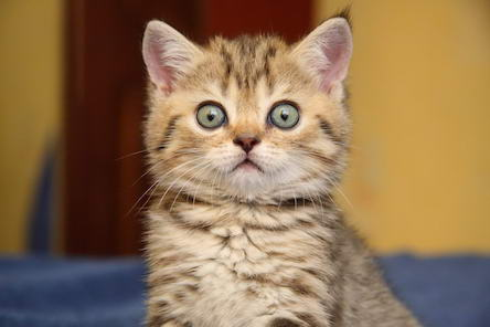 Свежие новости: Херсонец заплатит 1700 гривен штрафа за то, что обстрелял кота