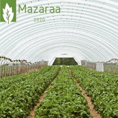 مزرعة و تطور الزراعة في السعودية
