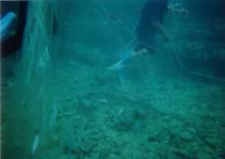 網に掛った魚