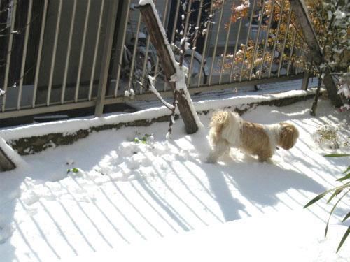 雪に記念のおしっこをかける