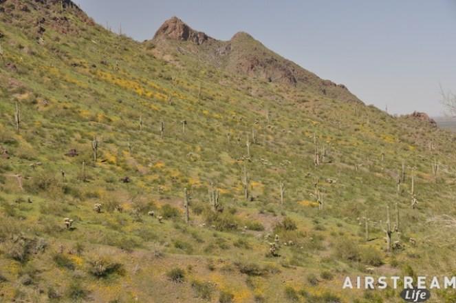 picacho-desert-green.jpg
