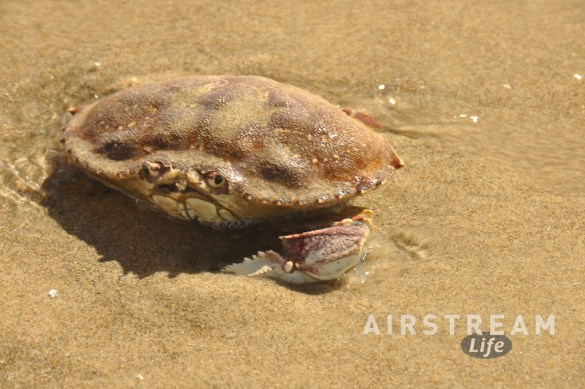 beachside-sp-or-crab-glance