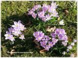 spring2_03