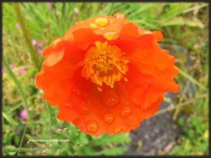 floralfriday_27jan17