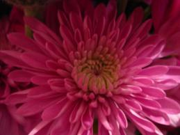 051412_1127_Flowers5.jpg