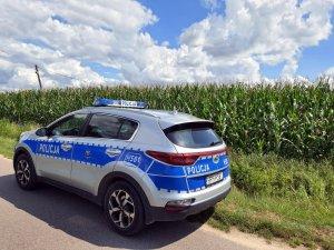 radiowóz, w tle pole kukurydzy