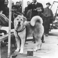 Pies Hachiko: Japoński symbol wierności