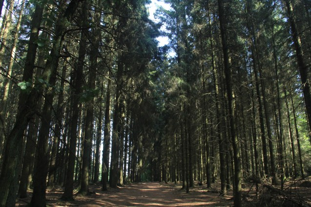 """Woods where the """"Band of Brothers"""" Easy company fought"""
