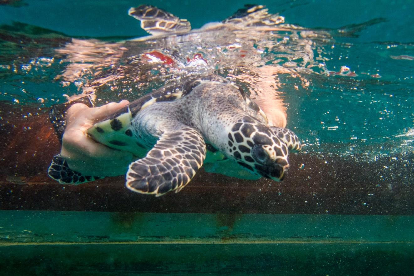 Vườn ươm rùa biển của Hải quân Hoàng gia khao lak kao lak Thái Lan