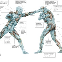 Martial Arts Diagram How To Read Chord Diagrams Human Reference Tumblr